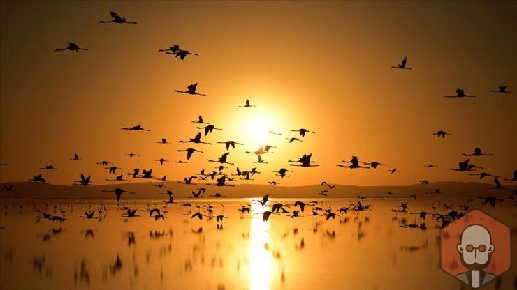 Kuşlar Nasıl Uçar, Kuşların Uçmasını Sağlayan Özellikleri – Kuslar Nasil Ucar Kuslarin Ucmasini Saglayan Ozellikleri